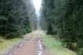 Am Sonntag zeigt sich der Hunsrücker Wald von seiner schönsten Seite.