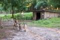 .. zusammen mit null-schüchternen Ziegen und Zicklein in deren Gehege zelten.