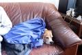 Der Hund fühlte sich in Ruhe und auf dem Sofa am wohlsten.