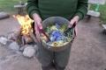 Am ersten Fahrtag gleich ein kleines kulinarisches Highlight: Essbare, blaue Boretschblüten