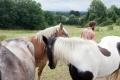 Guntas beide Pferde.