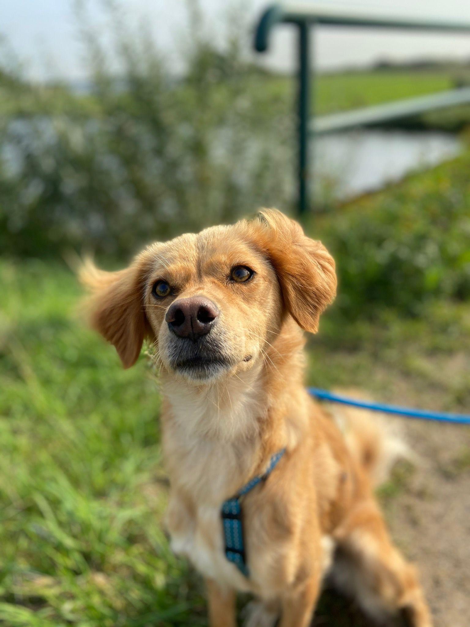 Hund Jua von Projektleitungsmitarbeiterin Annika