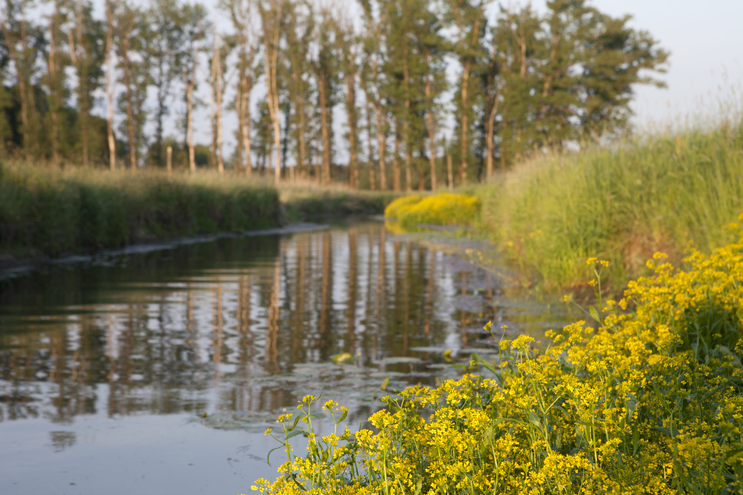 Naturlandschaft, Fluss mit Blumen am Rand