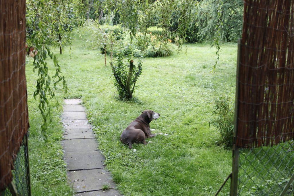 sitzender Hund auf einer Wiese