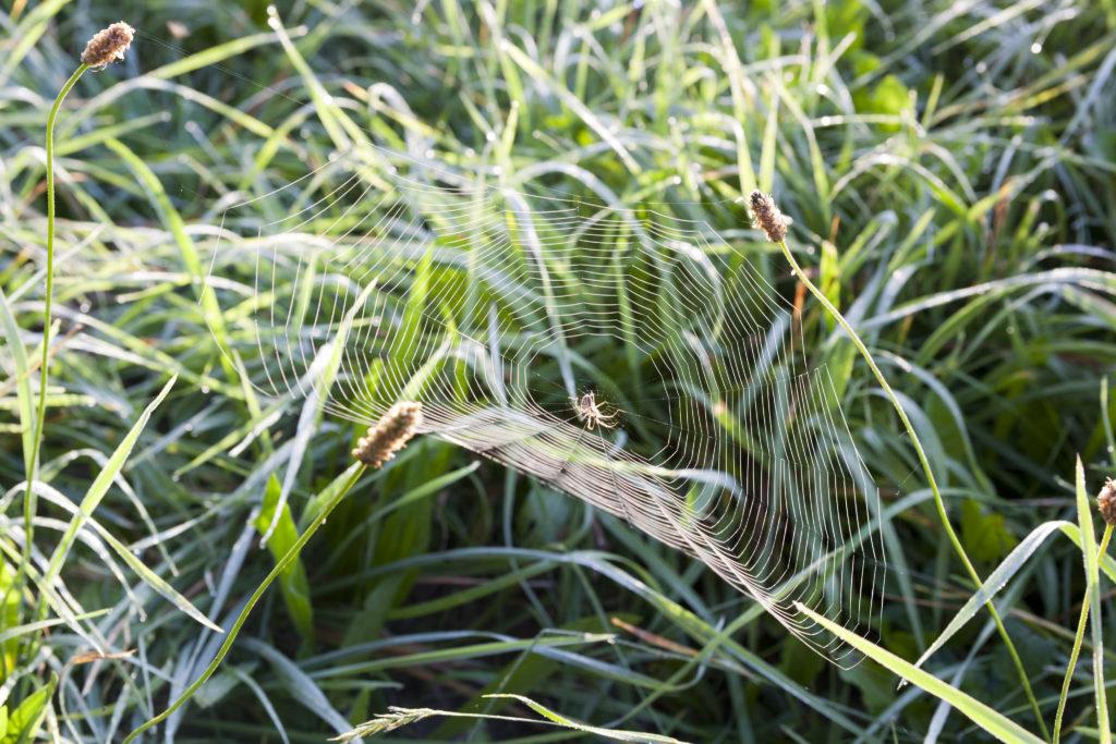 Spinnennetz als Sinnbild für ein Unterstützungssystem innerhalb einer psychischen Krise